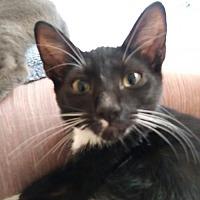 Adopt A Pet :: Rosalie - Los Angeles, CA
