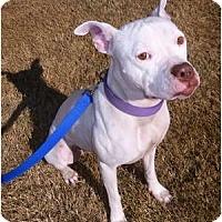Adopt A Pet :: Marli - Scottsdale, AZ
