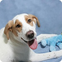 Adopt A Pet :: Eugene - Lufkin, TX