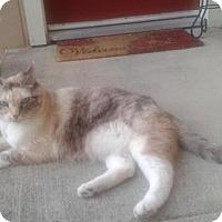 Adopt A Pet :: Caddy - Sacramento, CA
