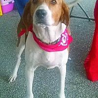 Adopt A Pet :: Honey - Zolfo Springs, FL