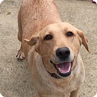 Adopt A Pet :: Willie Bee - Nashville, TN