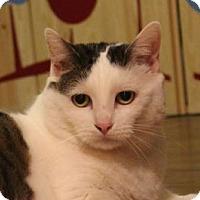 Adopt A Pet :: Lele - Dallas, TX