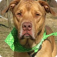 Adopt A Pet :: Jarrett - Menomonie, WI