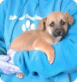 Hound (Unknown Type) Mix Puppy for adoption in Ozone Park, New York - Kennedy