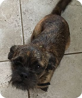Cairn Terrier/Dachshund Mix Dog for adoption in Washington, D.C. - Mia (ETAA)
