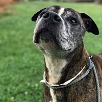 Adopt A Pet :: Winston - Greensboro, NC