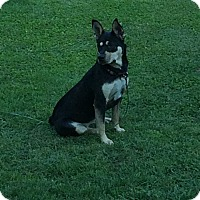 Adopt A Pet :: Gracie - Mooresville, NC