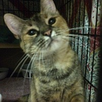 Adopt A Pet :: Lita - East Brunswick, NJ