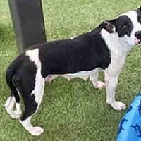 Adopt A Pet :: LAVERNE - Waco, TX
