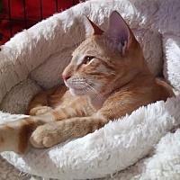 Adopt A Pet :: Rusty - Flushing, NY
