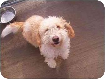 Terrier (Unknown Type, Medium) Mix Dog for adoption in Higginsville, Missouri - Charlie