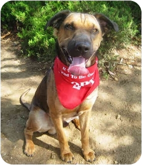 Shar Pei/Shepherd (Unknown Type) Mix Puppy for adoption in San Diego, California - Louie