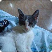 Adopt A Pet :: Little Spirit - Cleveland, OH