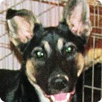 Adopt A Pet :: Hurley - Oakley, CA