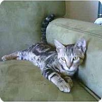 Adopt A Pet :: Kasey - San Ramon, CA