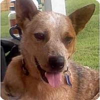 Adopt A Pet :: Libby - Siler City, NC