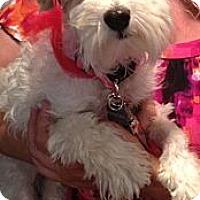 Adopt A Pet :: Kimmie - Oceanside, CA
