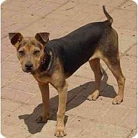 Adopt A Pet :: Fiona - Fowler, CA