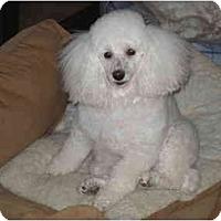 Adopt A Pet :: Monique - Dover, MA
