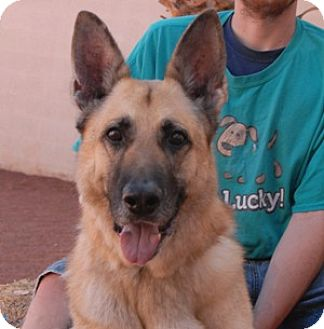 German Shepherd Dog Mix Dog for adoption in Las Vegas, Nevada - Rugby