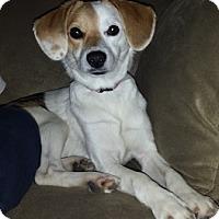 Adopt A Pet :: Sally - Hamilton, ON