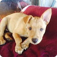 Adopt A Pet :: Fern - Santa Monica, CA