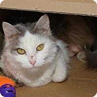 Adopt A Pet :: Kelly - Baton Rouge, LA