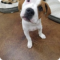 Adopt A Pet :: Big - Rathdrum, ID