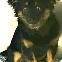 Adopt A Pet :: Henry - Boulder, CO