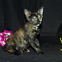 Adopt A Pet :: Cindy Lou - Fayetteville, GA