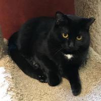 Adopt A Pet :: Serafina - Rochester, MN