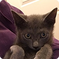 Adopt A Pet :: Stormie - Staten Island, NY