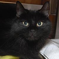 Adopt A Pet :: Penelope - Jaffrey, NH