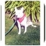 Photo 2 - American Staffordshire Terrier Mix Dog for adoption in San Clemente, California - BEYONCE
