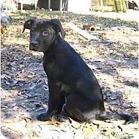 Adopt A Pet :: Ruth - Thomasville, GA