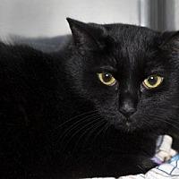 Adopt A Pet :: Susan Storm - Lombard, IL