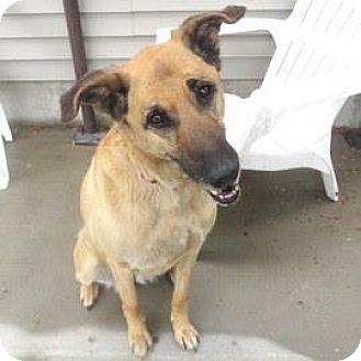 German Shepherd Dog Mix Dog for adoption in Janesville, Wisconsin - Sassy