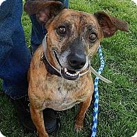 Adopt A Pet :: Penny - Athens, GA