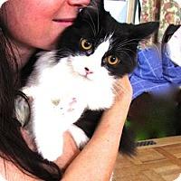 Adopt A Pet :: Katie - Davis, CA