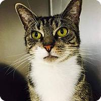 Adopt A Pet :: Ivy - Jackson, NJ