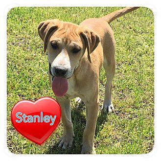 Hound (Unknown Type) Mix Puppy for adoption in Ravenna, Texas - Stanley