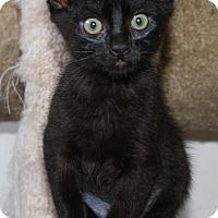 Adopt A Pet :: Joy - Santa Rosa, CA