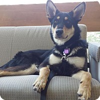 Adopt A Pet :: Sam - Saskatoon, SK