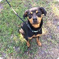 Adopt A Pet :: Luna - Seffner, FL