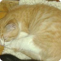 Adopt A Pet :: Devin - Whittier, CA