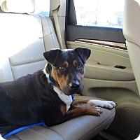 Adopt A Pet :: Pru in CT - Manchester, CT