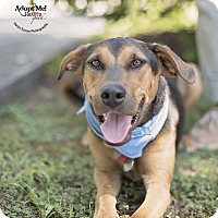 Adopt A Pet :: Loki - Kingwood, TX