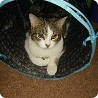 Adopt A Pet :: Sprite - McHenry, IL