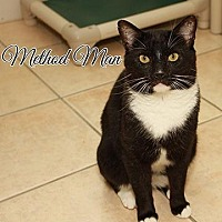 Adopt A Pet :: Method Man - Fall River, MA